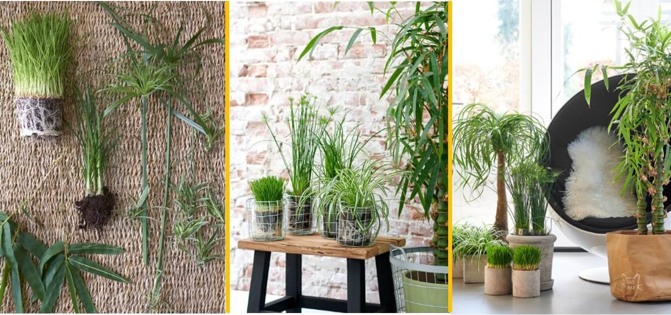 Pet-friendly plants houseplant of the month October