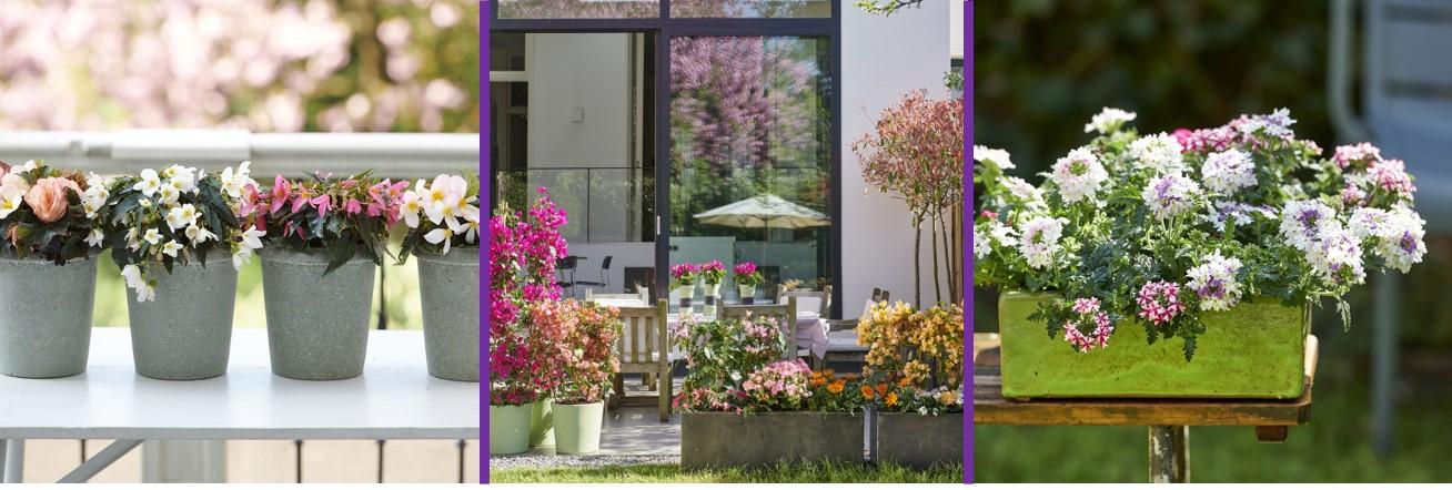 Gartenpflanzen des Monats April: Farbbringer