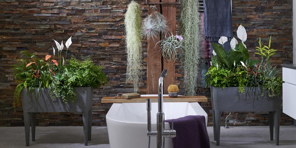 A chaque mois sa plante, mai : les Plantes pour salle de bain