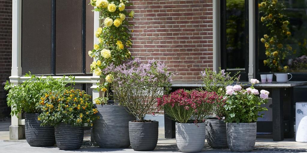 Duftende Blickfänger: Gartenpflanzen des Monats Mai